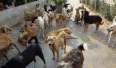 Anul trecut, 300 de caini fara stapan din adapostul de la Giurgiu au fost adoptati in Germania