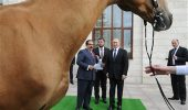 Russian President Vladimir Putin, right, presents Bahrain's King Hamad bin Issa Al Khalifa, left, with Khadzhibek, a horse with an ancient Central Asian breed called Akhal-Teke during their meeting in the Bocharov Ruchei residence in the Black Sea resort of Sochi, Russia, Monday, Feb. 8, 2016. (Mikhail Klimentyev/Sputnik, Kremlin Pool Photo via AP)