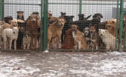 """""""Domnule Prim-Ministru Dacian Ciolos, crima la adresa cainilor fara stapan din Romania trebuie sa inceteze!"""" – SEMNEAZA PETITIA!"""