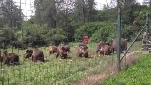 O ursoaica noua pentru Zarnesti – cel de-al 89-lea animal salvat si adus la Libearty