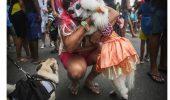 La Venetia si Rio, cainii se bucura de costumatiile de carnaval…