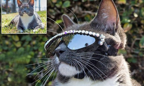 Sunglass Cat Bagel
