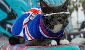 Pisicuta fortata sa poarte ochelarii de soare, din cauza unei afectiuni medicale, a devenit vedeta Internetului