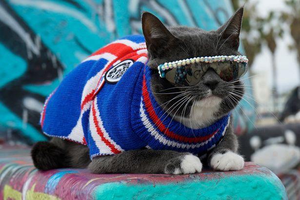 Bagel el gato que nació sin párpados