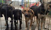 """Operațiunea de SALVARE a câinilor din """"LAGĂR""""! VIDEO"""