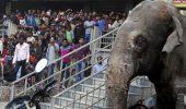 Un elefant ratacit, alungat cu pietre de localnici, a facut dezastru intr-un orasel din India