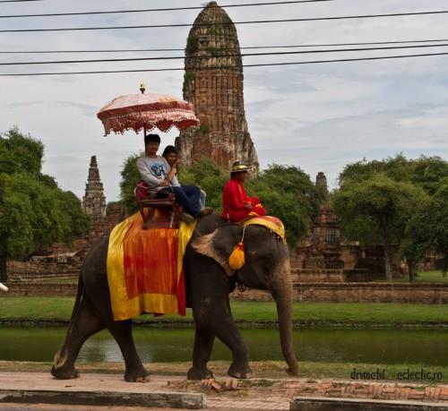 Noi critici cu privire la industria turismului in care sunt folosite animale: un britanic a fost ucis de un elefant, pe o insula din Thailanda