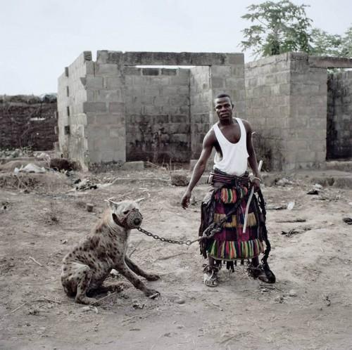 Despre mitul imblanzitorilor de hiene din Nigeria