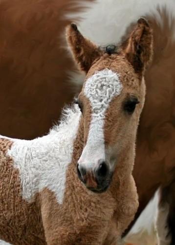 Minunatii cai Zabaikalskie