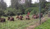 O ursoaica prinsa in decembrie, pe strada, in Ploiesti, a ajuns la Libearty Zarnesti
