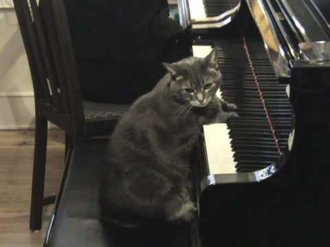 Nora, pisica pianista! Si, NU, nu este gluma!