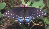 Care e mai spectaculos? Fluturele sau omida?