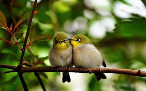 """Știați că au fost observate păsări migratoare care-și """"repetă"""" iarna partiturile pentru primăvară?"""