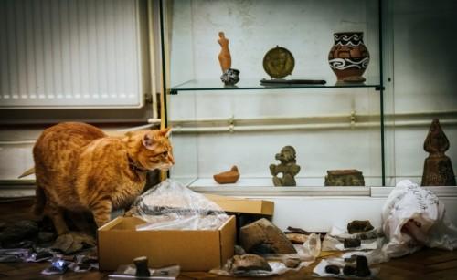 PISICILE de muzeu! Antonello si Donatello, de la Brukenthal