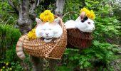 Pisicute, lenevind in cosuri