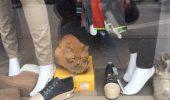 Magazinul in care a fost sechestrata o pisica a fost desigilat de ANAF