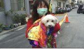 TAIWAN: Un caine a fost gasit, in viata, sub daramaturi, dupa 120 de ore de la cutremur