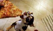 Ai un animalut prea gras? Cum il poti ajuta sa slabeasca sanatos?