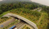 Pod ecologic pentru animale, peste cea mai aglomerata autostrada din Singapore!
