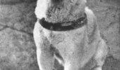 Pe 8 martie 1935 murea Hachiko, cainele care si-a asteptat stapanul aproape 10 ani