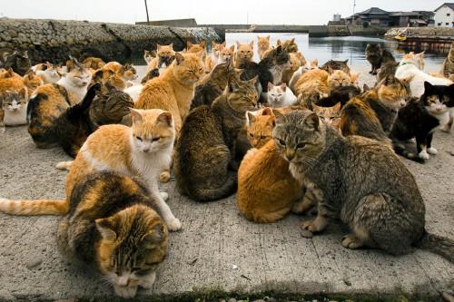 """Locuitorii """"Insulei pisicilor"""" au cerut hrana pentru feline, pe Internet"""