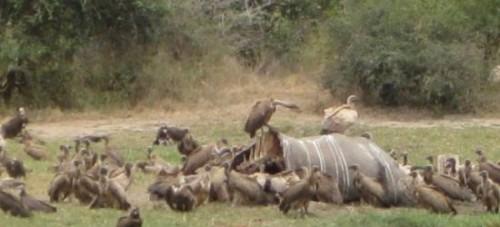 South-Africas-Kruger-Park-1200x545_c