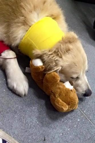 Speranta pentru Aksel, cainele-erou care a ajutat zeci de copii cu autism