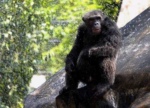 Thailand's zoo animals get fruit ice amid heat wave