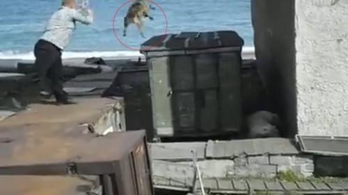 Cruzime sau un gest de salvare? Un barbat arunca un caine viu in ghearele unui urs polar