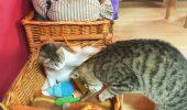 La o cafea, langa pisici dragastoase!