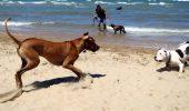 Stiai ca, daca-ti plimbi cainele pe plaja Marii Negre risti amenzi usturatoare?
