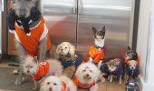 IUBIRE: un barbat isi dedica viata animalelor fara sanse de adoptie!