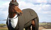 Calul imbracat la patru ace!