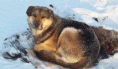 LOIALITATE: De mai bine de un an de zile, un caine isi asteapta stapanul, care a murit, infruntand temperaturi sub zero grade!