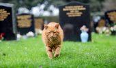 Pisica Barney a MURIT, dupa ce, timp de 20 de ani, a oferit sprijin celor care au pierdut pe cineva drag