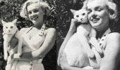 DE EXCEPTIE: O colectie foto, cu adevarat IMPRESIONANTA! Celebritati si pisici