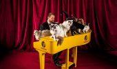 Miauzic – Un pianul cu ultrasunete, pentru pisici