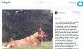 Salma Hayek deplange moartea tragica a unuia dintre cainii ei