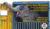 Vier Pfoten cere Cora Romania sa nu mai gazduiasca circul cu animale salbatice in parcarile magazinelor sale