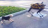 Fido vs Spot, caine vs robot, fiinta vs inginerie!