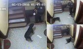 Inca un politist american a fost filmat cand impusca, din senin, un caine…
