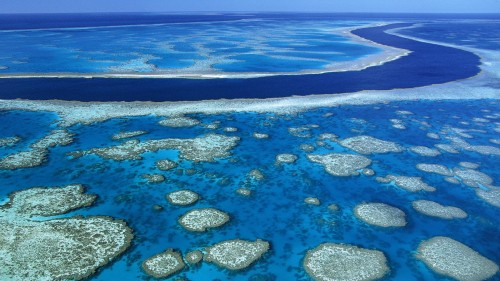 Marea Bariera de corali se albeste