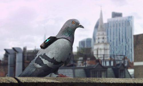 Pigeon Air Patrol, pentru aer curat, in Londra!