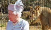 O noua sectie pentru lei, la zoo din Londra
