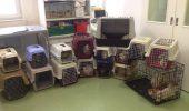 IMAGINI INFIORATOARE: 29 de pisici, salvate dintr-o garsoniera din capitala! FOCAR DE INFECTIE!