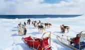 Traditionala cursa de sanii trase de caini, din Alaska, in pericol de a nu se tine in totalitate