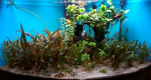 foto: www.facebook.com/aquaticdesigncontest