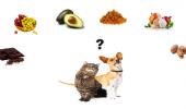 Ce produse din alimentația noastră putem împărți cu prietenul nostru CANIN. CE ARE VOIE?