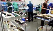 Pisici sacrificate in testarile produselor cosmetice