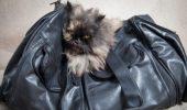 UTIL: De ce este nevoie cand alegi sa iei si pisica, in strainatate?